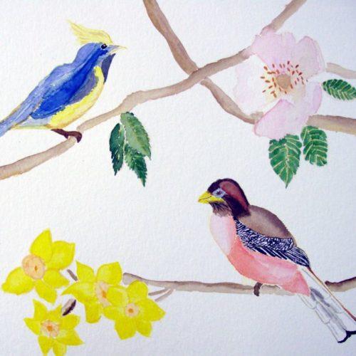 Oiseaux d'aquarelle